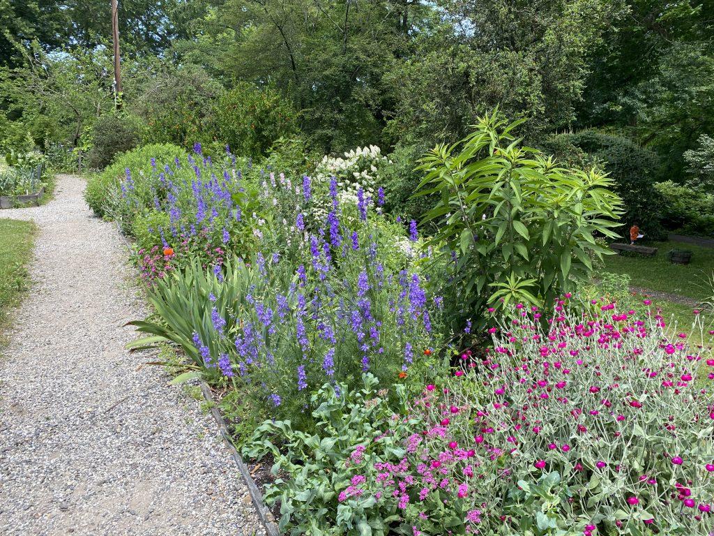Bartram's Garden Flowers