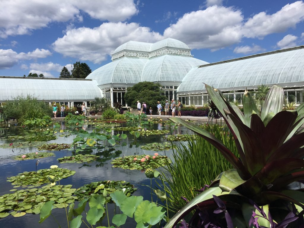 Bronx Garden lilies